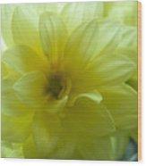 Yellow Petals Bathing In Sunlight Wood Print