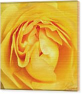 Yellow Petals Wood Print by Cathie Tyler