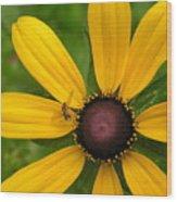 Yellow Petals Wood Print