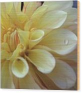 Yellow Petals With Raindrop Wood Print