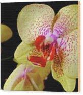 Yellow Phalaenopsis Orchid Wood Print