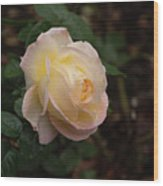 Yellow/pink Rose Wood Print