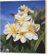 Yellow Plumeria Flowers On Maui Hawaii Wood Print