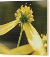 Yellow Pollinate Wood Print