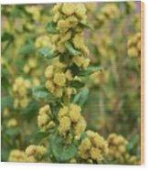 Yellow Pom Poms Wood Print