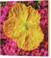 Yellow Poppy And Kalanchoe Flowers Wood Print