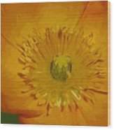 Yellow Poppy Wood Print