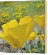 Yellow Poppy Flower Meadow Landscape Art Prints Baslee Troutman Wood Print