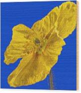 Yellow Poppy On Blue Background Wood Print