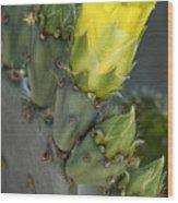 Yellow Prickly Pear Cactus Bloom Wood Print