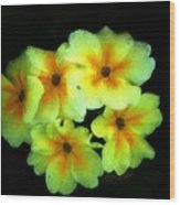 Yellow Primrose 5-25-09 Wood Print