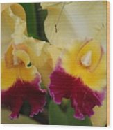 Yellow Purple Orchids Wood Print