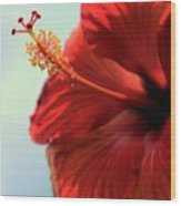 Yellow Red And Coral Hibiscus Profile Wood Print