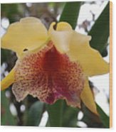 Yellow Red Orchid Wood Print