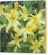 Yellow Rhododendron Wood Print