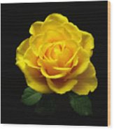 Yellow Rose 6 Wood Print