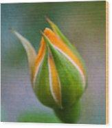 Yellow Rose Bud - Rose Bud Wood Print