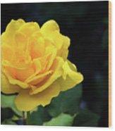 Yellow Rose - Full Bloom Wood Print