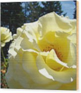 Yellow Rose Garden Landscape 3 Roses Art Prints Baslee Troutman Wood Print