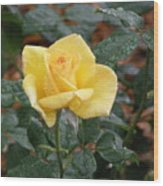 Yellow Rose In The Rain Wood Print