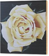 Tea Rozsa Wood Print