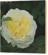 Yellow Rose Of Texas Too...   # Wood Print