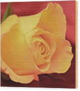 Yellow Rose On Red Wood Print