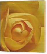Yellow Rose Art Wood Print