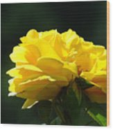 Yellow Rose Sunlit Rose Garden Landscape Art Baslee Troutman  Wood Print