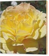 Yellow Rose Sunlit Summer Roses Flowers Art Prints Baslee Troutman Wood Print
