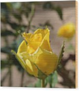 Yellow Rose With Ants Wood Print
