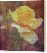 Yellow Rose With Raindrops 3590 Idp_2 Wood Print