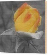 Yellow Rosebud Partial Color Wood Print