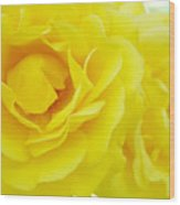 Yellow Roses Art Prints Botanical Giclee Prints Baslee Troutman Wood Print