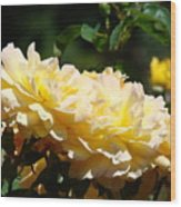 Yellow Roses Sunlit Rose Flowers 1 Rose Garden Giclee Artwork Baslee Troutman Wood Print