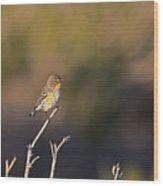 Yellow Rump Wood Print
