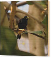 Yellow-rumped Cacique 3 Wood Print