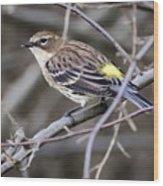 Yellow-rumped Warber In Fall Colors Wood Print