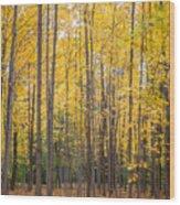 Yellow Saplings Wood Print
