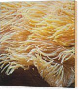 Yellow Sea Anemones Macro Wood Print