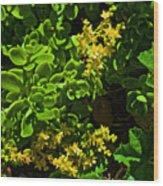 Yellow Sedum At Pilgrim Place In Claremont-california Wood Print