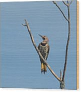 Yellow Shafted Flicker Front Wood Print