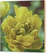 Yellow Shy Wood Print