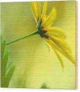 Yellow Spring Daisy Abstract By Kaye Menner Wood Print