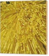 Yellow Strings Wood Print