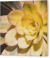 Yellow Succulent Wood Print