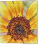 Yellow Sunflower Wood Print