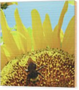 Yellow Sunflower Art Prints Bumble Bee Baslee Troutman Wood Print