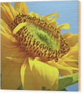 Yellow Sunflower Blue Sky Art Prints Baslee Troutman Wood Print