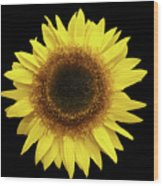 Yellow Sunflower Isolated On Black Background 8 Wood Print